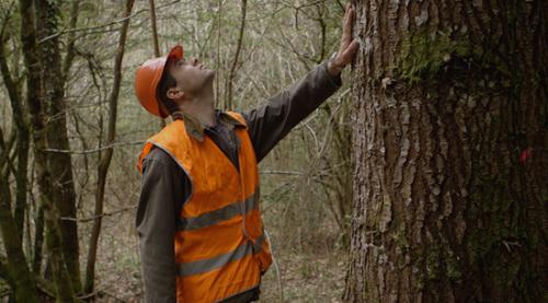 expert-forestier