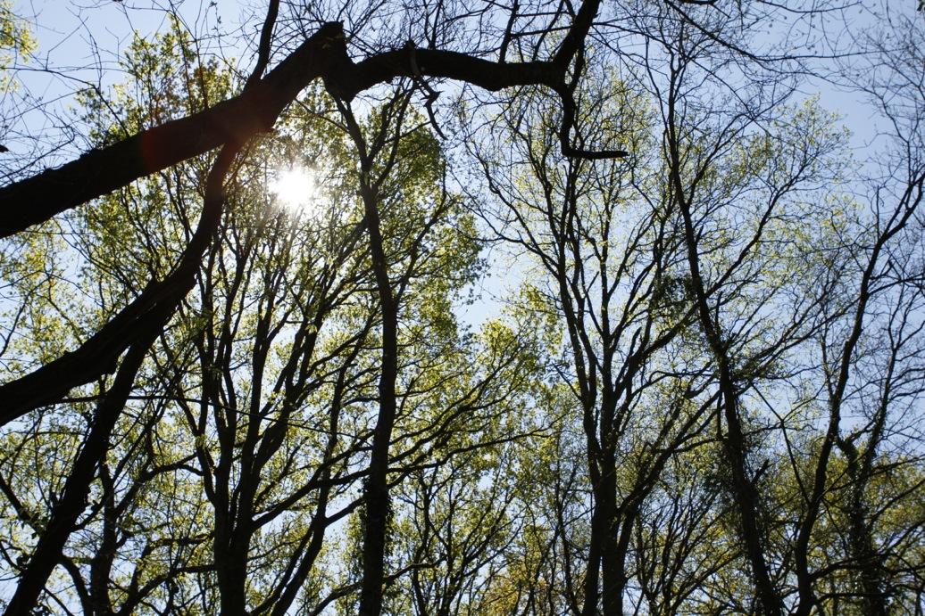 Expert forestier grume